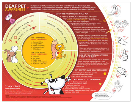 Deaf Pet Infographic