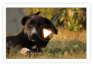 Watch this video to find out how Trupanion covered 90% of Gracie's vet bills after a long fall