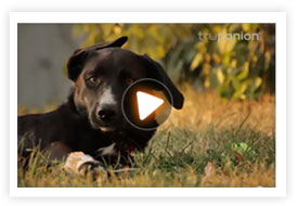 Watch this video to find out how Trupanion pet insurance covered 90% of Gracie's $8000 vet bill.