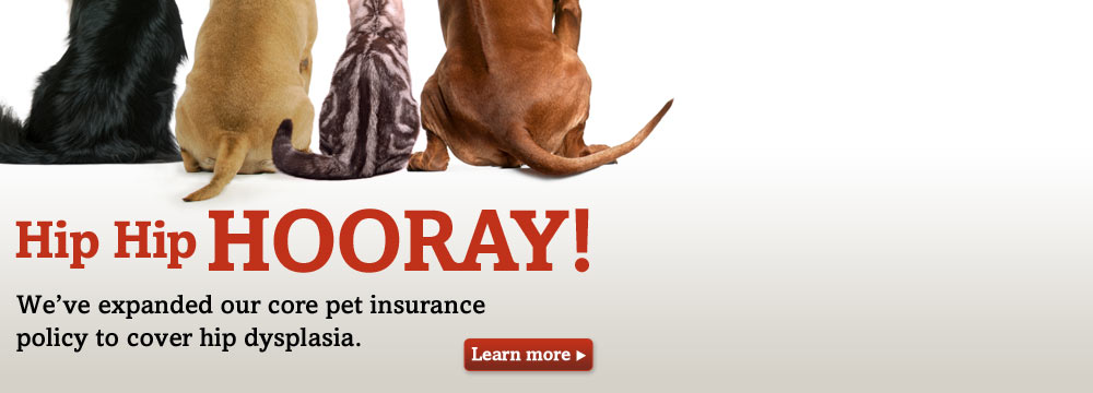 Dog and Cat bums - Trupanion Pet Insurance now covers hip dysplasia