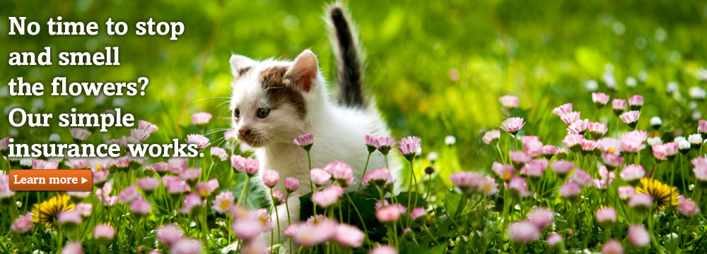 Kitten on grass. Trupanion has a simple cat and kitten insurance plan.