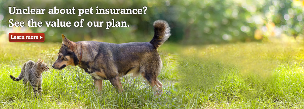 Dog and cat. See the value of Trupanion Pet Insurance.
