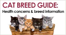 Trupanion Cat Breed Guide for breed-specific health, background and personality information