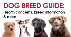 Trupanion Dog Breed Guide for breed-specific health, background and personality information