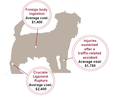 dog graphic