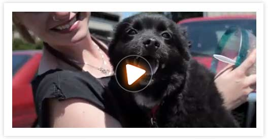 Pet Fire Safety video