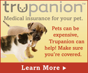 Learn More About Pet Insurance